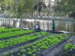 Chinampa, or floating garden